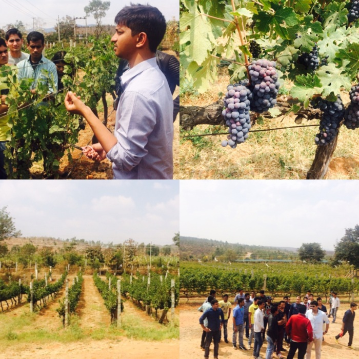 JayaKumar, Training & Trade Marketing Manager at Grover Zampa talking about Viticulture to visitors